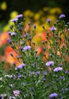 Aster_071013c