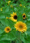 Sunrich_071101b_2