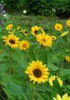 Sunrich_071103b