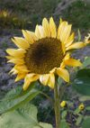 Sunrich_071123