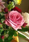 Pink_bunny_071123b_2