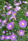 Aster_080920_2