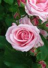 Pinkbunny_090523a