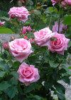 Pinkbunny_090523c
