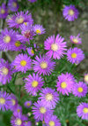 Aster_090926a