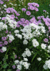 Aster_091003a