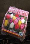 Tulip091016a