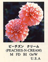 Peaches_n_cream_01_2